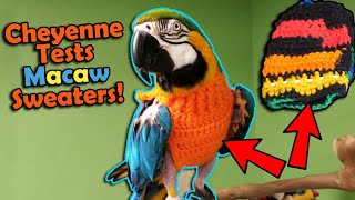 Trying out Sweaters for our Feather-Plucking Macaw!