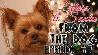 Letters To Santa From The Dog 7
