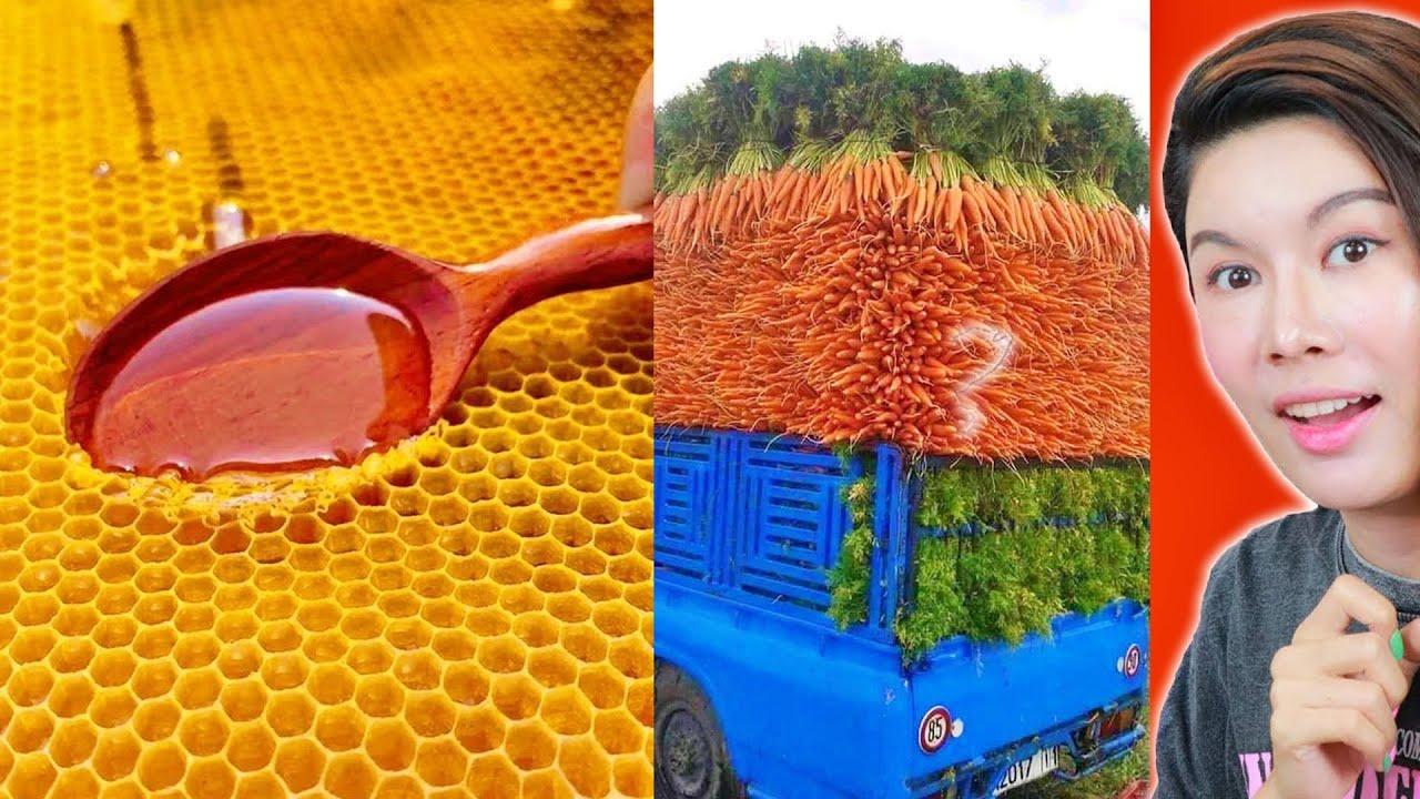 น้ำผึ้งฉ่ำๆ เห็นเเล้วกลืนน้ำลาย รวมคลิปความพึงพอใจ🤗🏺 ( ฟินเวอร์ )