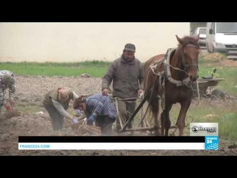 Klondike: the Amber Mafia of Western Ukraine
