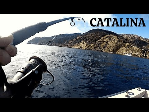 CATALINA ISLAND FISHING (Catch Clean Cook) BEST WAY TO EAT FISH
