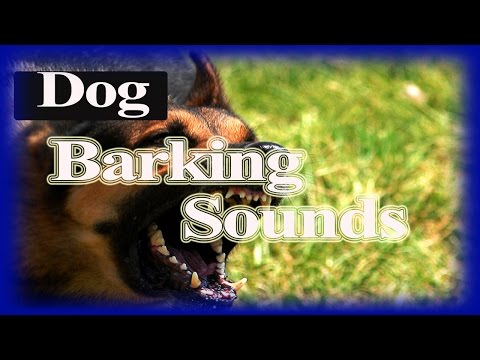Dogs  Barking Sounds | Dogs Sounds Effects 12 Hour
