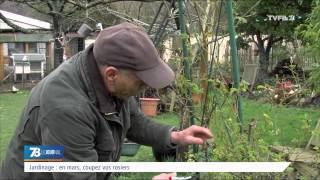Jardinage : en mars, coupez vos rosiers