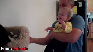 Funny Babies Laughing at Cats Compilation   Cats Loves Babies Video
