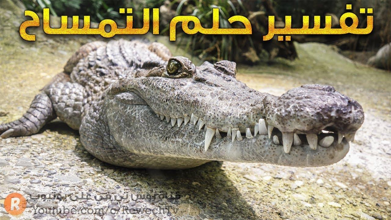 تفسير حلم التمساح ? - ما معنى رؤية التمساح في الحلم ؟ - سلسلة تفسير الأحلام