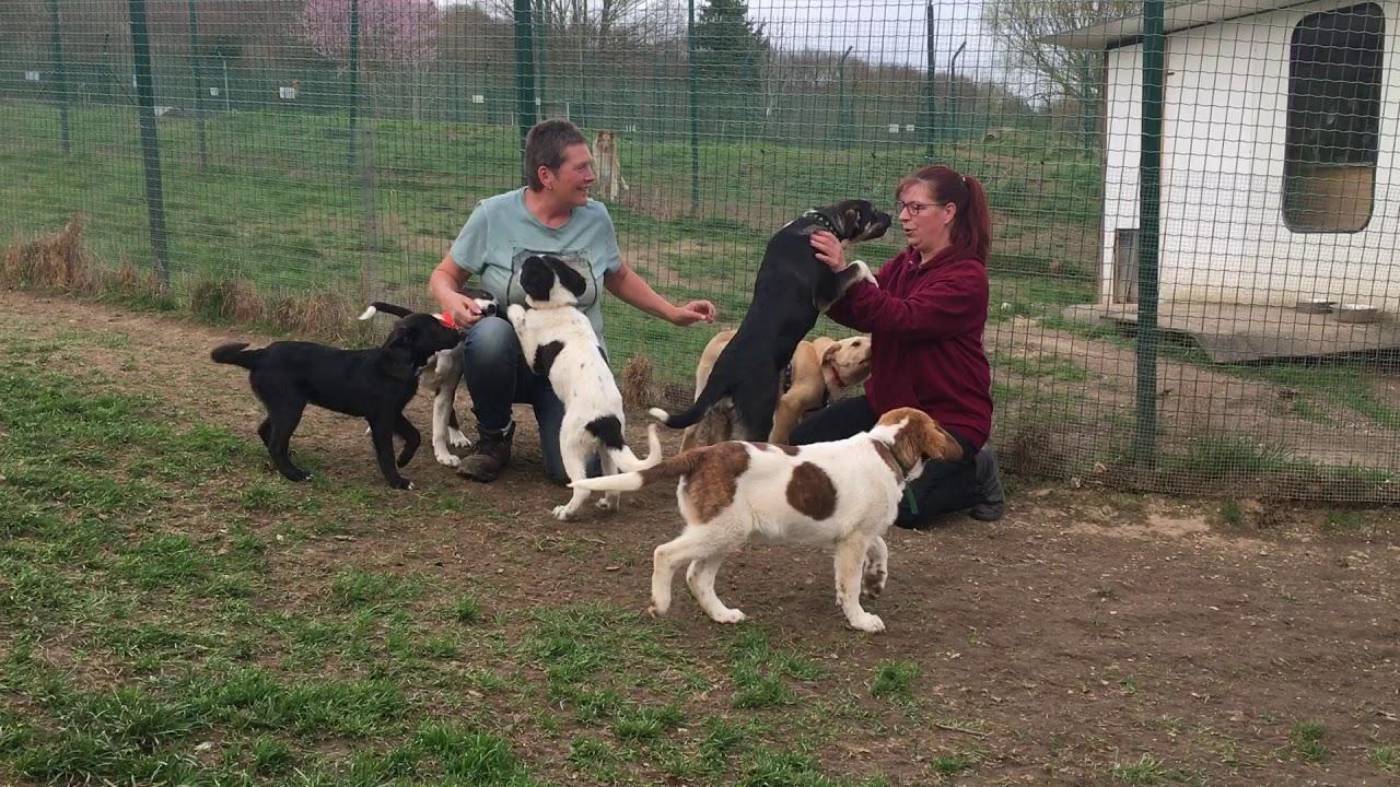 Tierheim Neuwied nimmt 15 Hunde, eine Katze und zwei ...