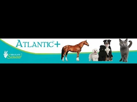 Irish Atlantic +  Seaweed food products for your animals