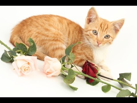 Как Понять Кошку?