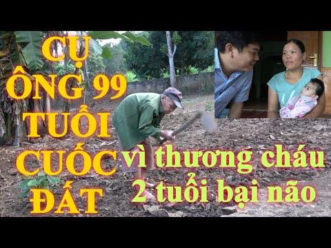 Ngưỡng Mộ CỤ ÔNG 99 Tuổi Cuốc đất Vì Cháu 2 Tuổi BẠI NÃO ở NGHỆ AN