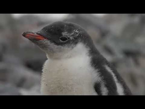ANTARCTIQUE 2019