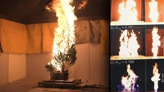 Sparking love for science by studying Christmas trees burn thumbnail