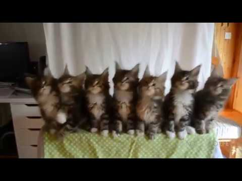CAT VINE 16 minutes of funny cats best 2016