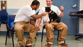 Prison inmates care for shelter dogs