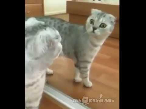As reacciona un gato al mirarse al espejo youtube - Espejos para rebotar el mal ...