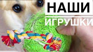 Игрушки для собак/ЧТО С НИМИ СТАЛО!