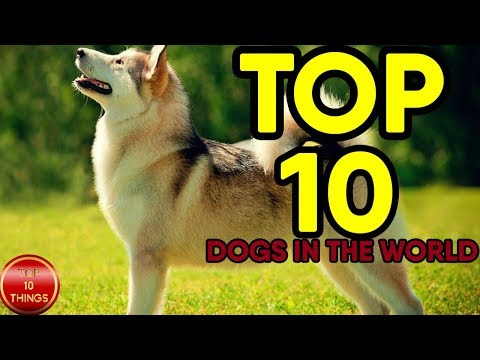 top-10-dogs-breeds-in-the-world|-top-10-amazing-dogs|