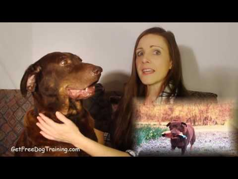 Doggy Dan's Online Dog Trainer Review - Does Doggy Dan Work?