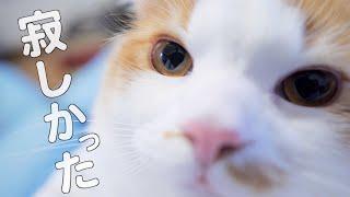 子猫が甘えたい時の最終手段は?!