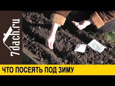 видео: 🌱 Подзимний посев: что, когда и как можно сеять под зиму - 7 дач