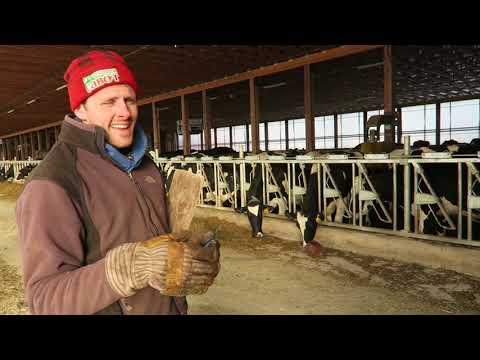 Automatic Scraper Maintenance, Barn Curtains, and a Goat Visit | Belden Farm