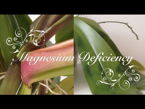 Magnesium Deficiency In Orchids - 11 Cases - Symptoms And Cure
