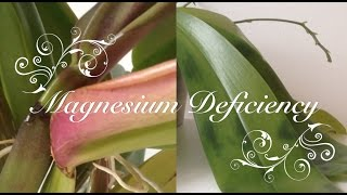 magnesium deficiency in orchids 11 cases symptoms and cure