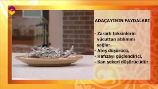 Tıbbi Bitkiler TRT DİYANET