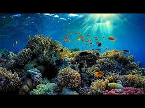 2017 HD Documentary On Coral - PBS Nova Lethal Seas