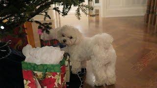 EARLY Christmas Gifts!   Lauren Orlando Vlogmas