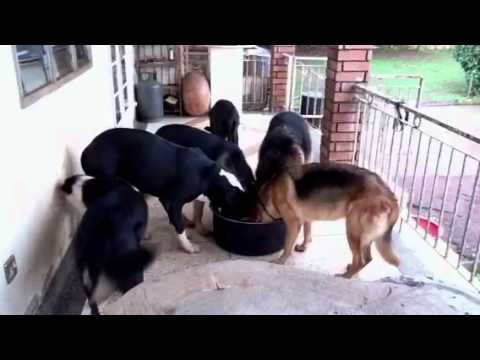 My security guards in Uganda