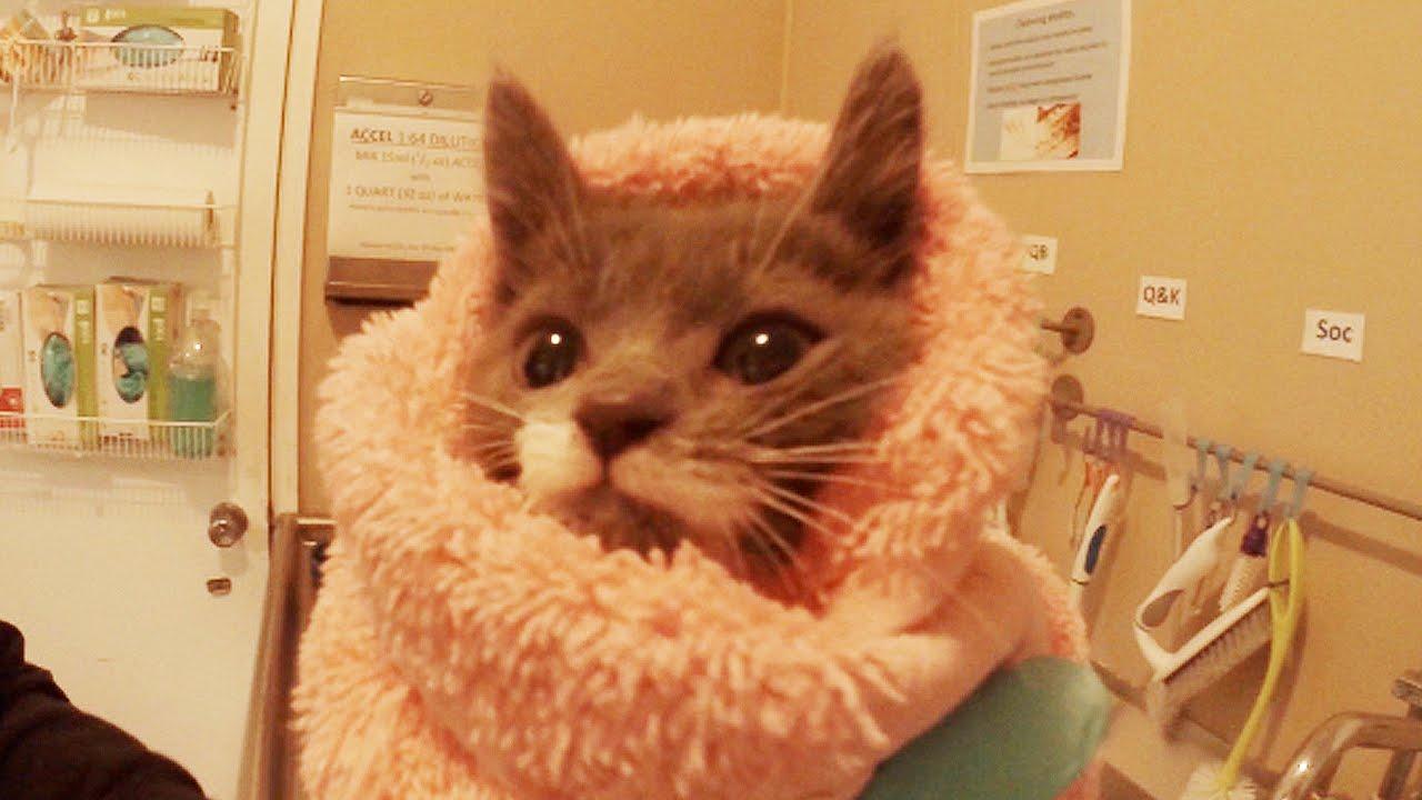 GoPro 24 Hr Kitten Nursery