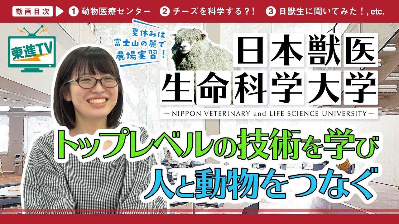新着動画【日本獣医生命科学大学】人と動物のいのちを支える〜獣医療とバイオサイエンスで社会に貢献〜(ぶらり大学探訪)