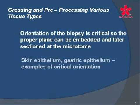 The First Step Is the Key—Grossing and Pre Processing Various Tissue Types