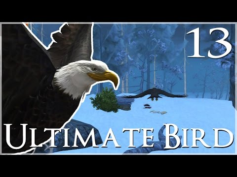 The Wilds of Winter Island!! • Ultimate Bird Simulator - Episode #13