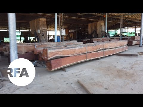 Cambodian Activists Say Lumber Company Illegally Logging In Protected Forest | Radio Free Asia (RFA)