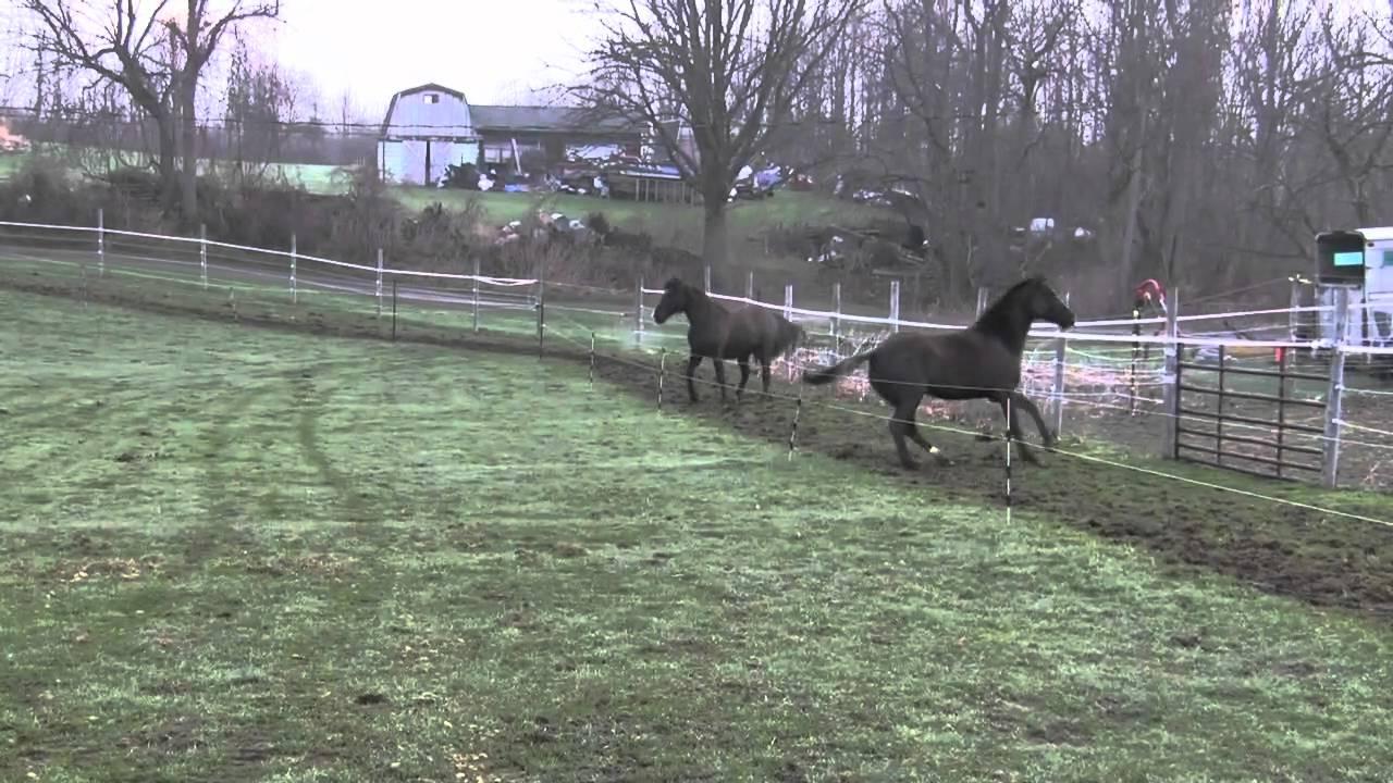 Horses Running On Paddock Paradise Track Youtube
