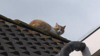 Brandweer bevrijdt doodsbange kat van dak in Waardhuizen