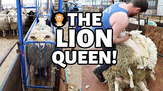 She had the most wool I've ever seen on our sheep farm yet! 😳| Vlog 439
