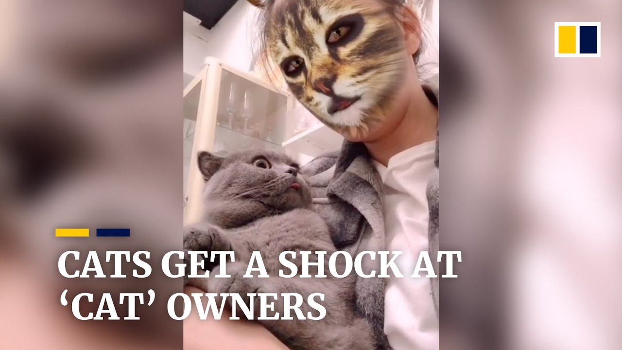 Cats get a shock when they see their 'cat' owners