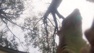 Gopro Squirrel Feeder Destruction!