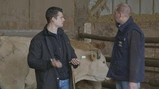 Interview Métiers - Jean-Benoit, commerçant en bestiaux
