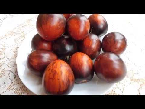 Коллекционные сорта томатов в разрезе   9 часть | монгольскийкарлик | безумиекасади | гаргамель | помидор | семена | огород | томат | дача | сад