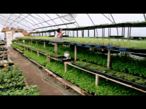 Organic Agriculture in the City of Toronto - Fresh City Farm