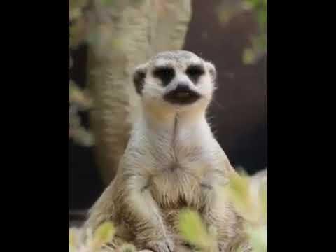 Monyet Gokil Anak Monyet Kaya Yg Nonton Youtube