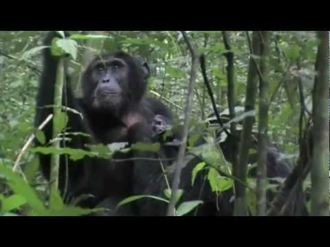Guide to safari holidays in Uganda: Bwindi and Kibale