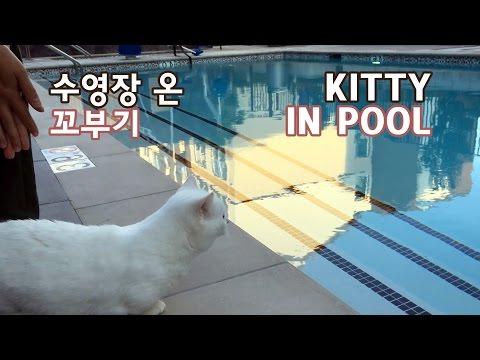 수영장 간 고양이 꼬부기