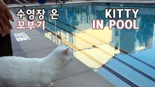 Cat at the Swimming Pool