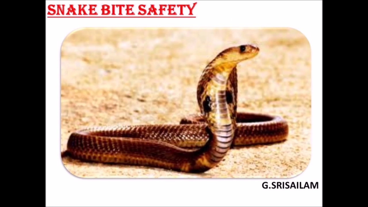 snake in hindi language Colour: usually not brightly coloured, but pythons, common sand boa, red sand  boa, anaconda, wart snakes (acrochordus granulatus), etc are brightly coloured.