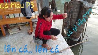 Câu cá bằng cây cần độc dính toàn cá lạ. Khám phá cửa biển Sông Đốc ( CMP3) | Săn bắt SÓC TRĂNG |