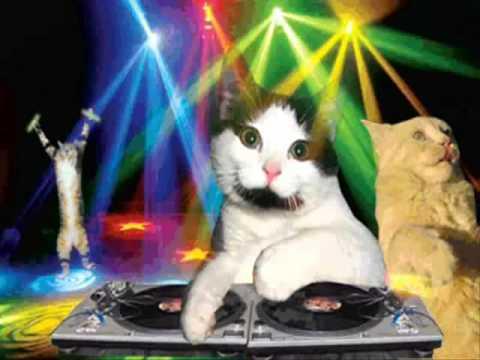 Funny Cat Birthday Meme : Happy birthday techno cat style youtube